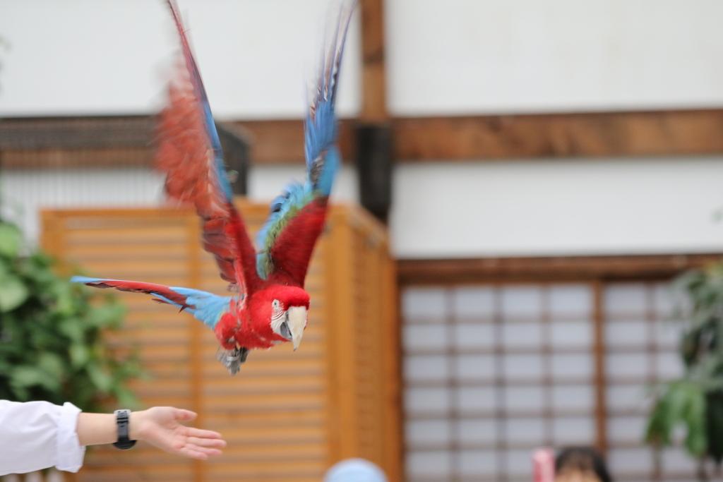 掛川花鳥園の鳥さん_1