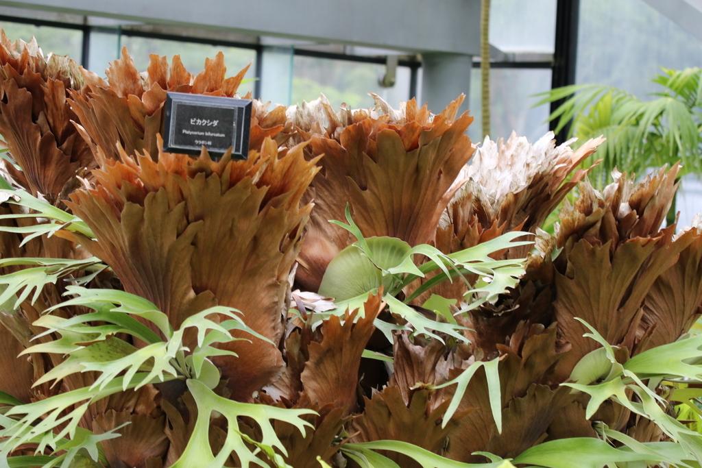 大温室内の花など(1)_1