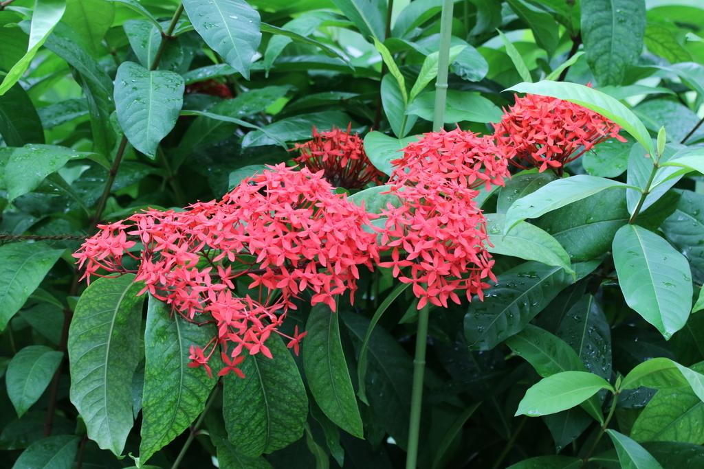 大温室内の花など(1)_2