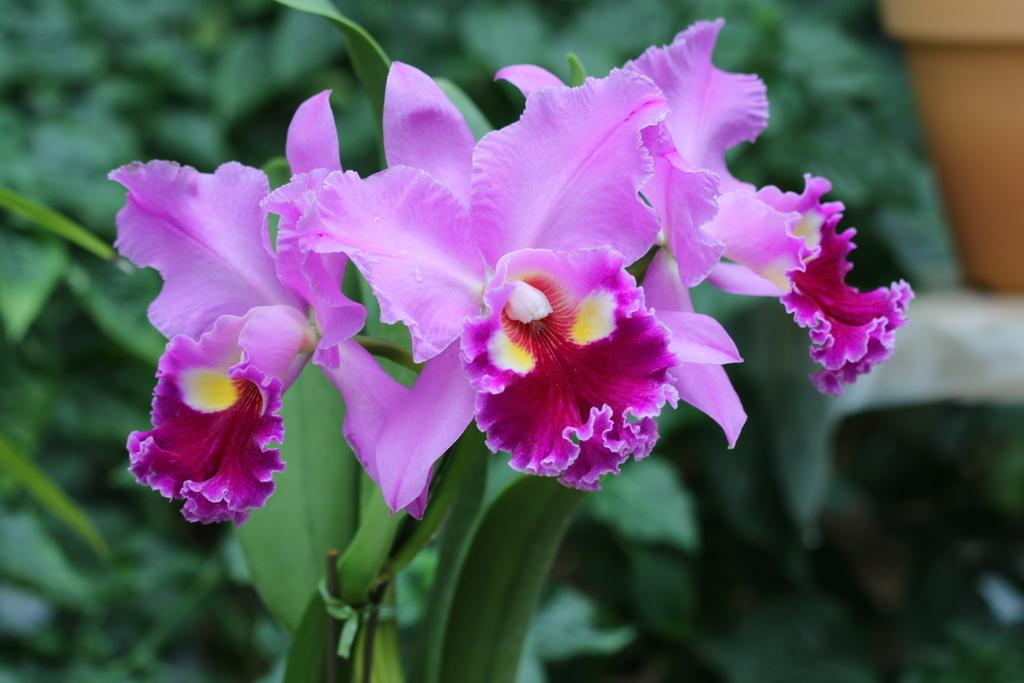 大温室内の花など(1)_4