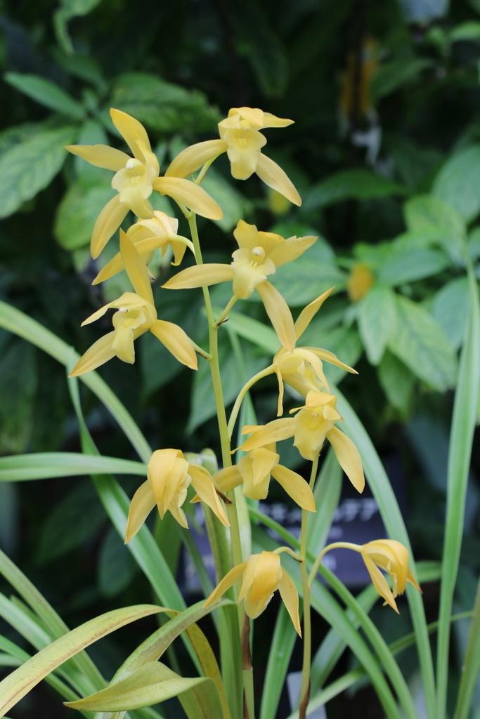 大温室内の花など(1)_5