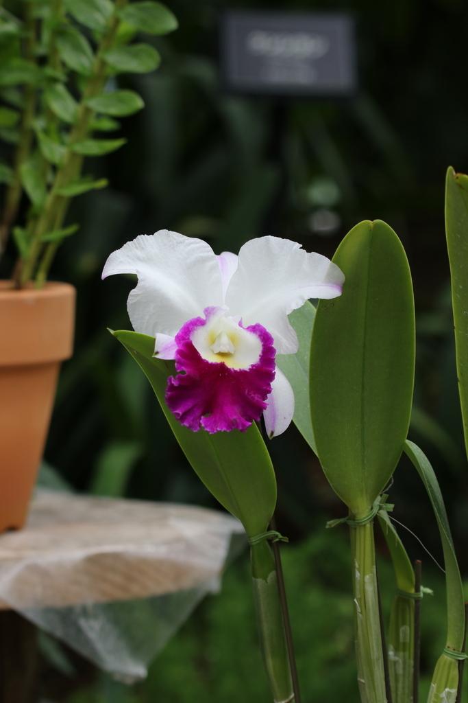 大温室内の花など(1)_6