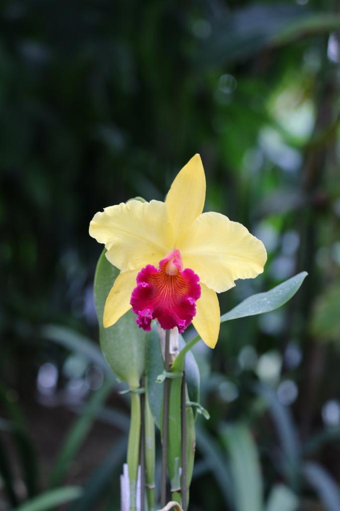 大温室内の花など(1)_7