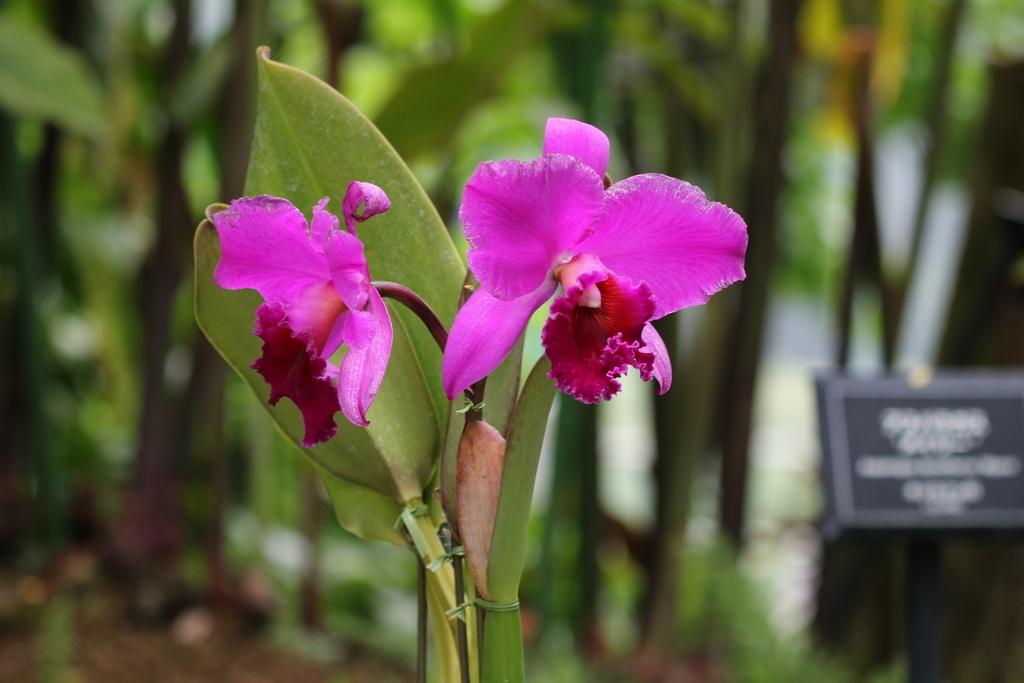 大温室内の花など(1)_8
