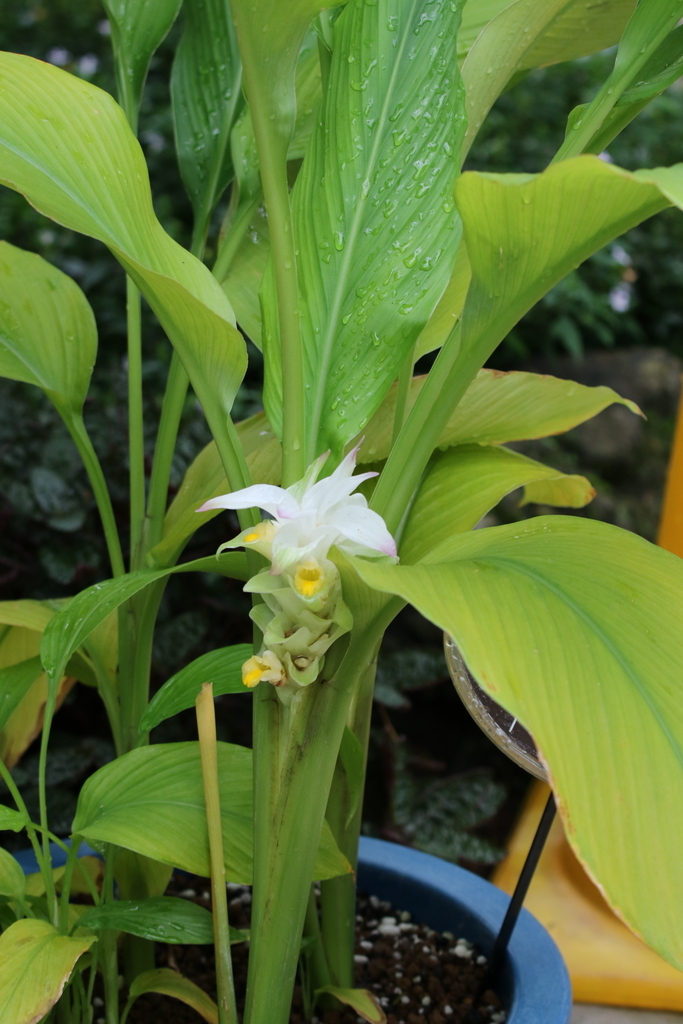 大温室内の花など(1)_9