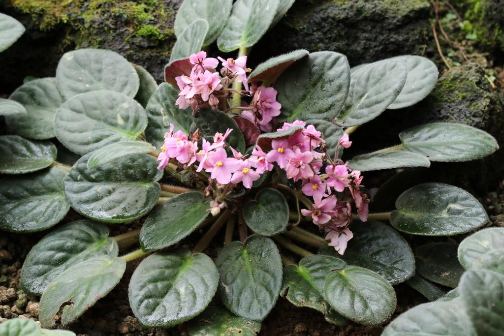大温室内の花など(2)_1