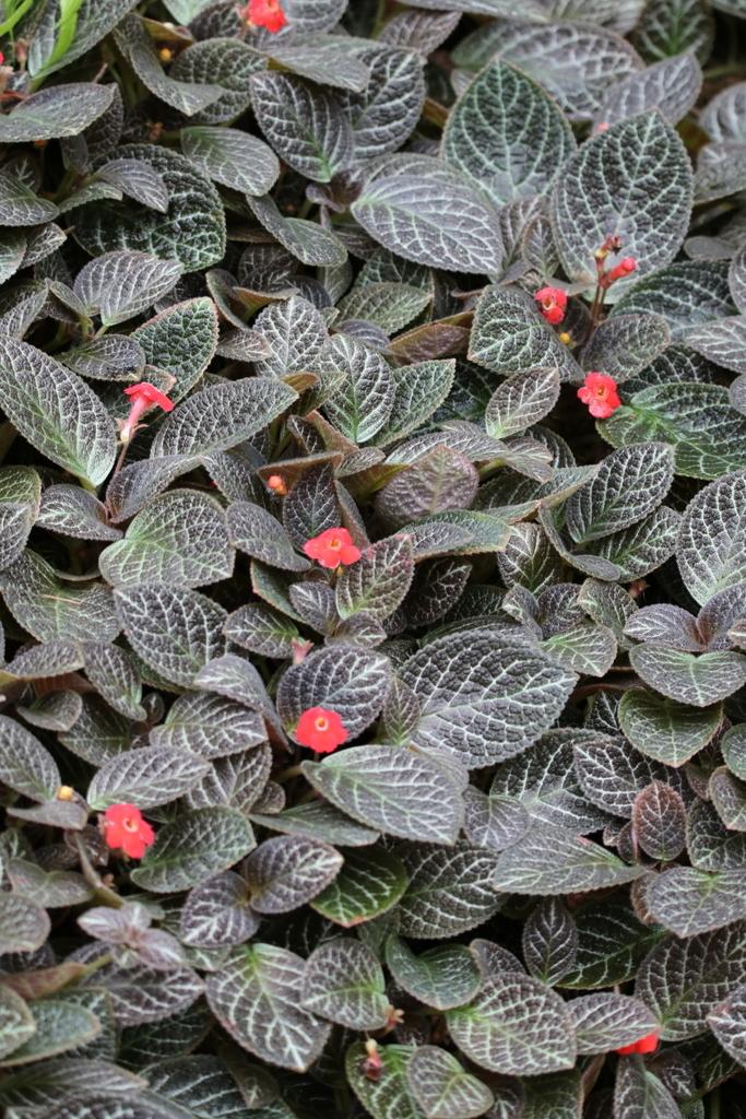 大温室内の花など(2)_4