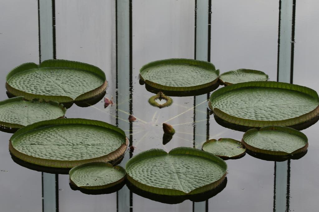 大温室内の花など(3)_1