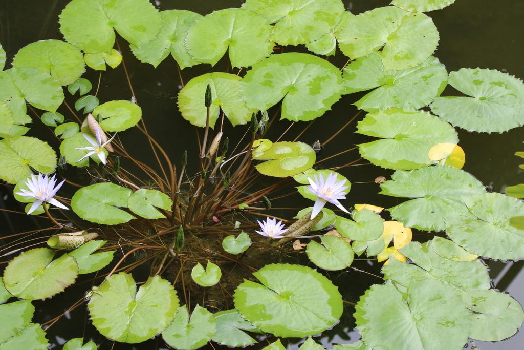 大温室内の花など(3)_2