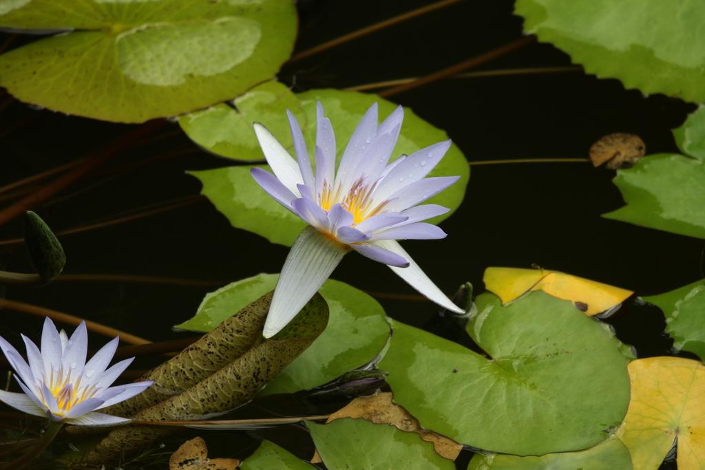 大温室内の花など(3)_3