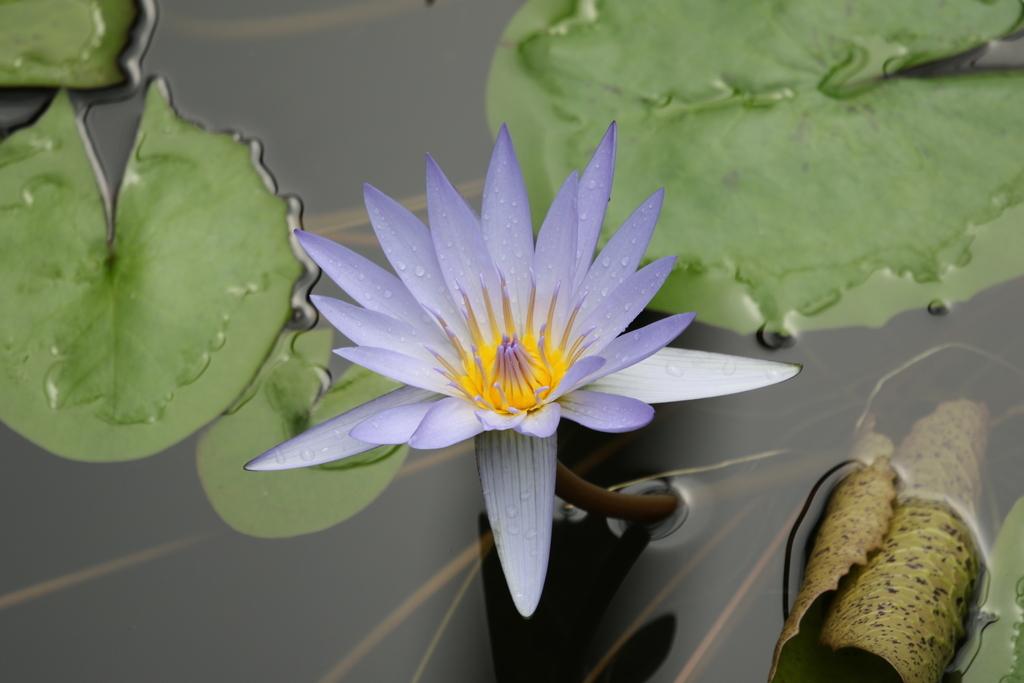 大温室内の花など(3)_4