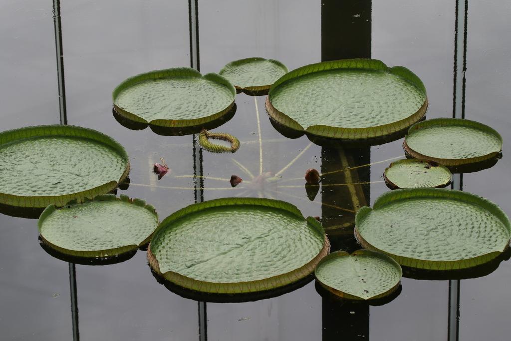 大温室内の花など(3)_5