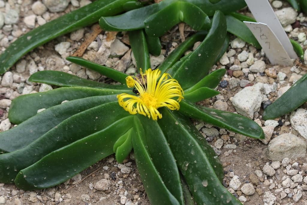 大温室内の花など(3)_6