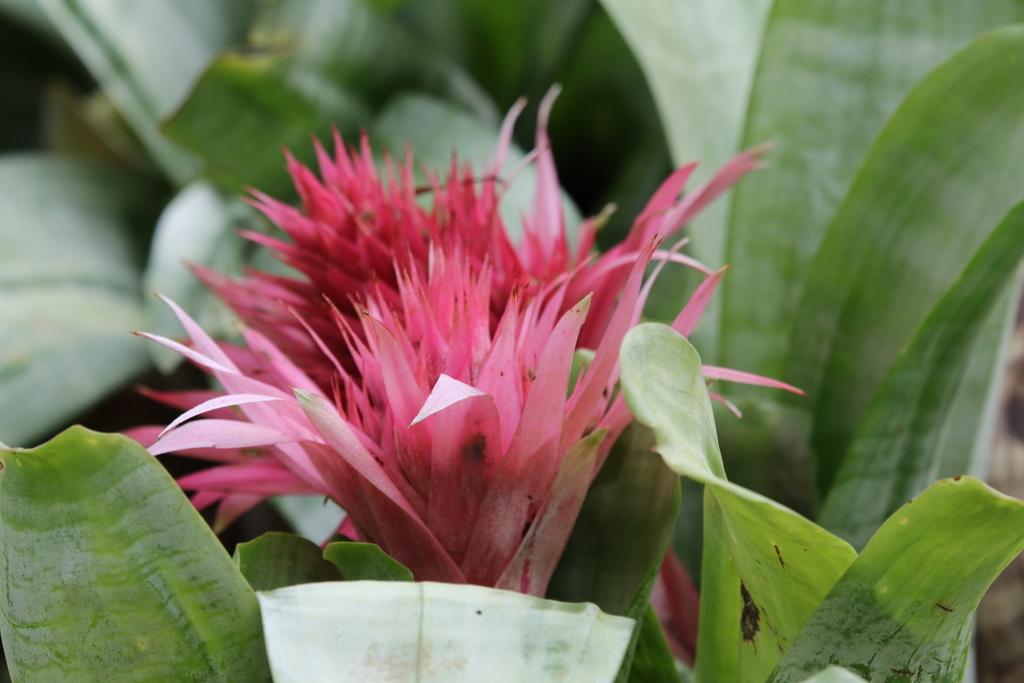 大温室内の花など(4)