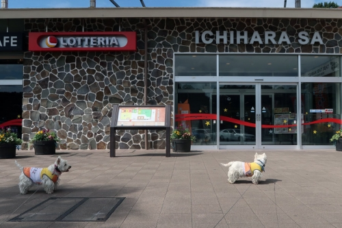 ichiharaSAhagoyoutasidesune1.jpg