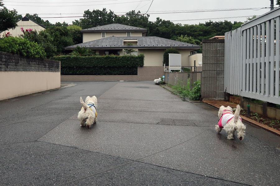 konnakaosarechaokorunnotouzen2.jpg
