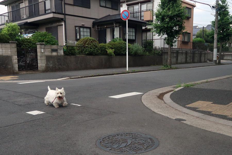 machinoyousudeyasumitowakaru2.jpg