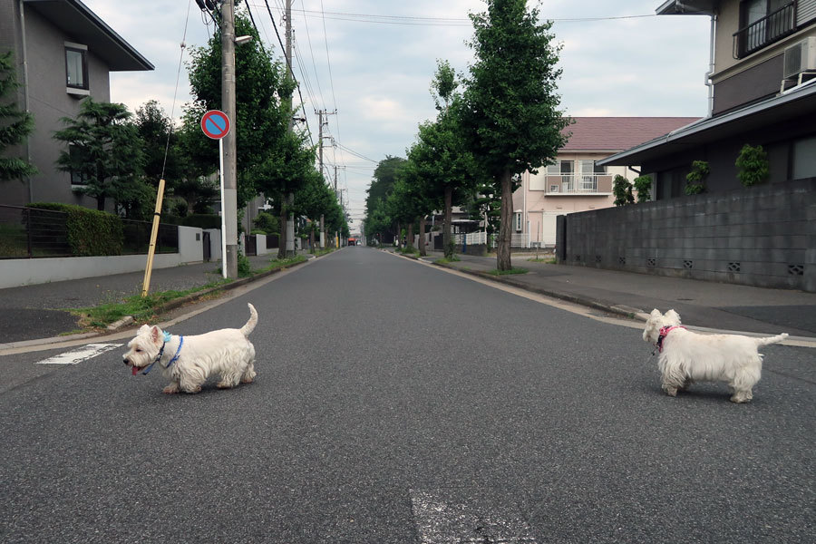 machinoyousudeyasumitowakaru5.jpg