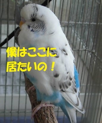CIMG8987.jpg