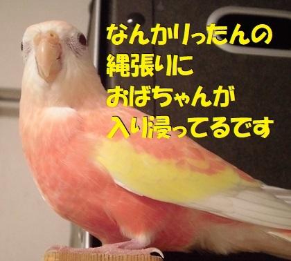 CIMG9153.jpg