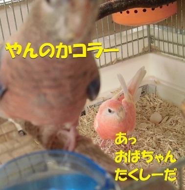 CIMG9157.jpg