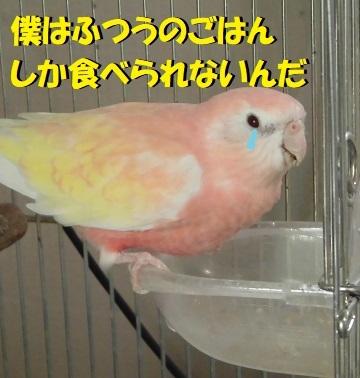 CIMG9575.jpg