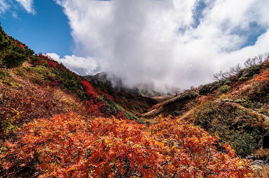 2018.10.08白山の紅葉 3 (64)