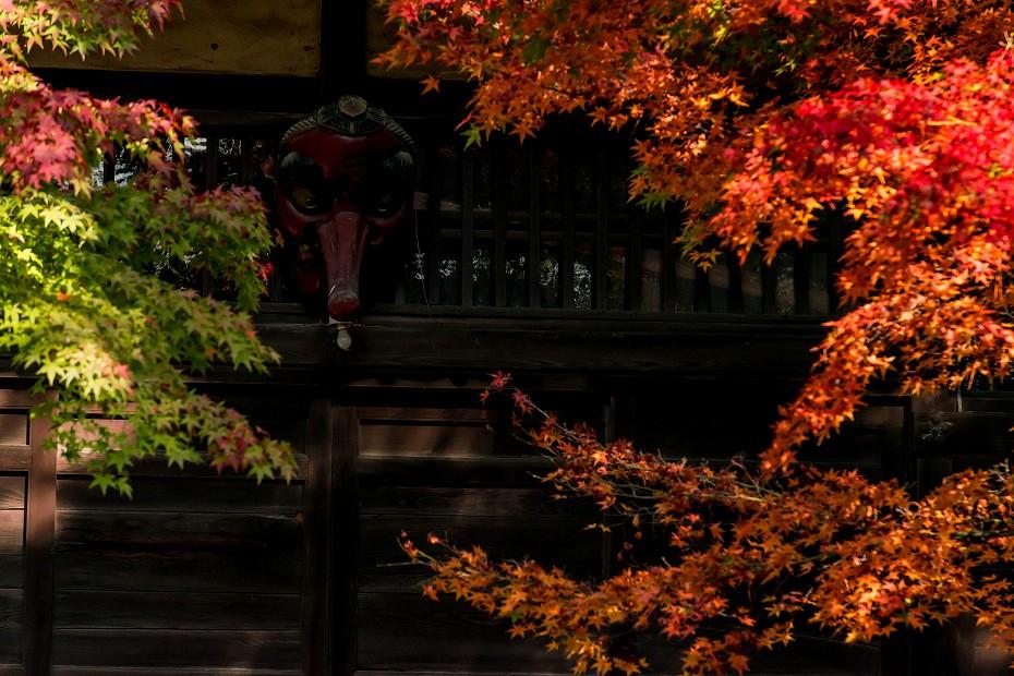 2018.11.13天徳院の紅葉1 (20)