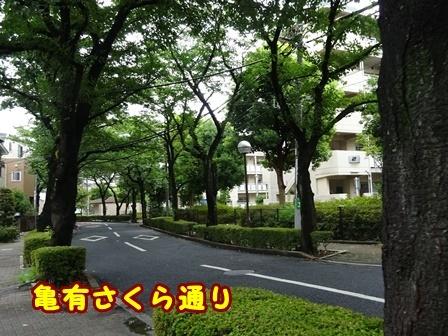 DSC02444a.jpg