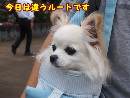 blog9745a.jpg