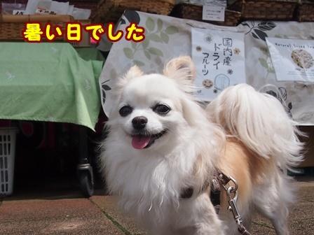 blog9746a.jpg