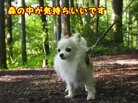 blog9989a.jpg