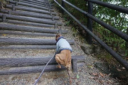 竜神大吊橋8