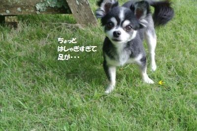 DSC_6539_convert_20170926110052.jpg