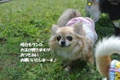 DSC_6565_convert_20170926134020.jpg