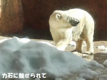 CIMG4613.jpg