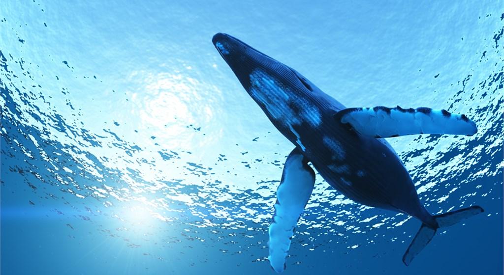 HowDoesABlueWhaleMove_whale.jpg