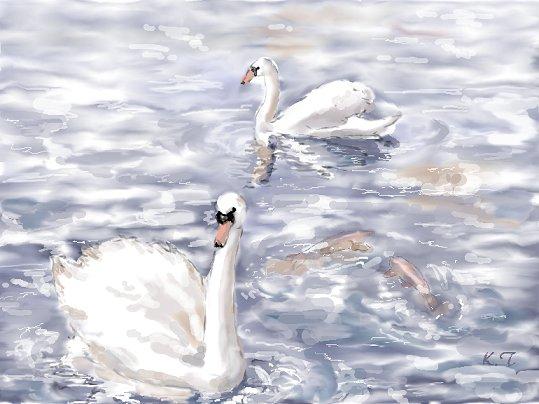 swan-nb.jpg