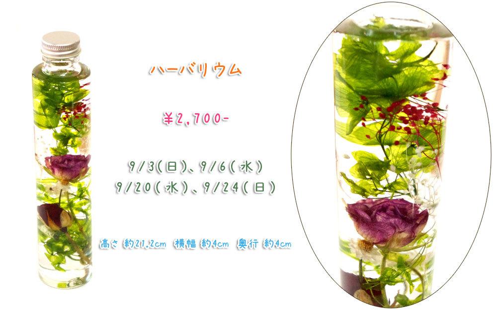 p_flower_201709a.jpg