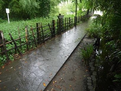お鷹の道・真姿の池湧水群(1)