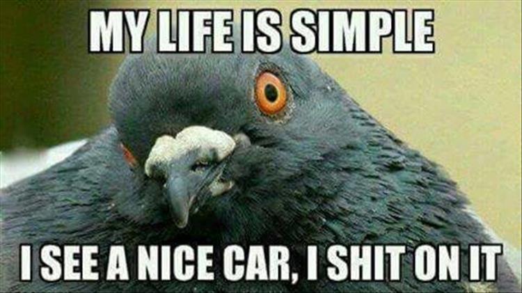 0925simple-life-of-a-bird