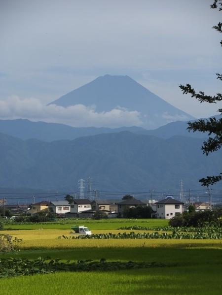信玄堤東側の風景・富士山と田んぼ