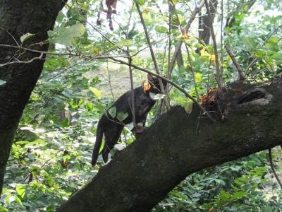 信玄堤水防林の桜と猫