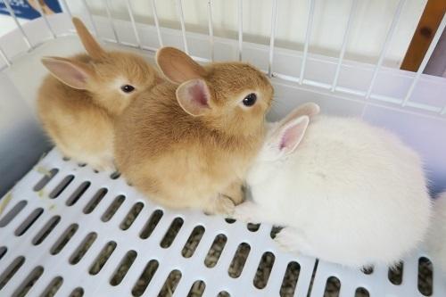 ミニウサギ0925