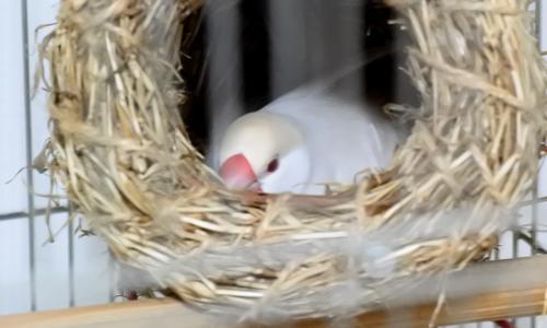 真夏の卵騒ぎ終了_1