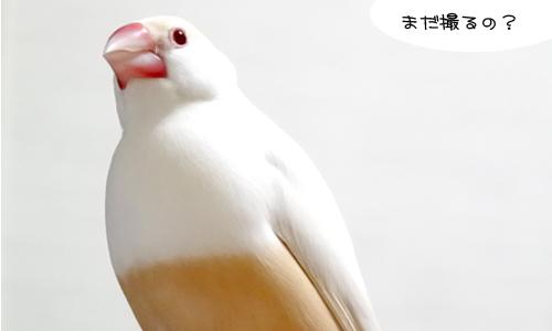 ぴのしゃんのショット集_4