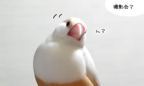 ぴのしゃんのショット集_1
