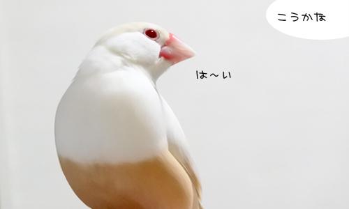 ぴのしゃんのショット集_2