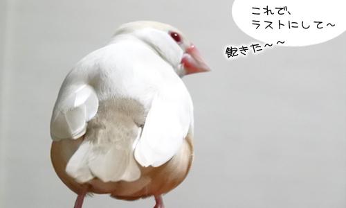 ぴのしゃんのショット集_6