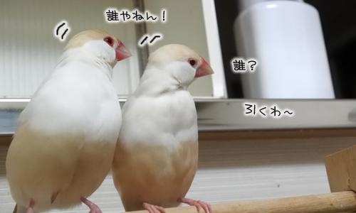 ぴのしゃんがおばちゃん化?_2